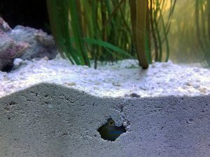 aquarium sand