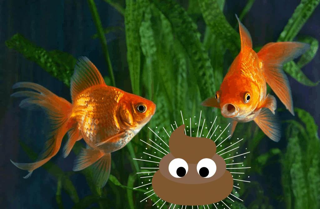 how do fish poop
